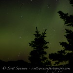 Northern Lights - with trees silhouetted against night sky